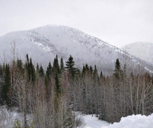 7 skieurs impliqués dans une avalanche au Mont-Albert