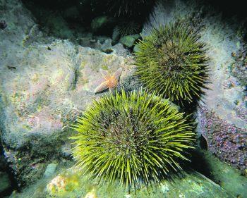 Fourchette bleue : Exploramer dévoile les espèces mises en valeur pour 2019